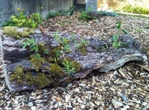 garden log